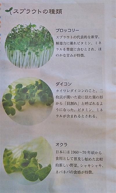 人気のスプラウト野菜「ぶろっこり」「カイワレ大根」「オクラ」